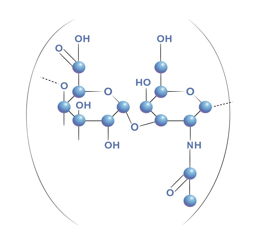 El Acido Hialurónico